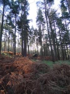 Tibradden Wood