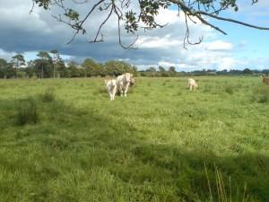 Wet grassland in Co. Meath